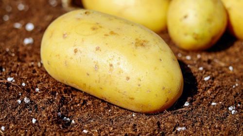 REŢETA ZILEI: Cartofi în careuri