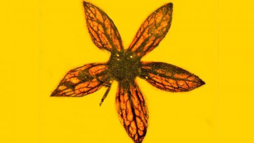 Flori contemporane cu dinozaurii, descoperite conservate perfect într-un chihlimbar