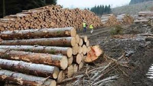 Doina Pană, Ministrul Apelor şi Pădurilor : Vom asigura 4 milioane metri cubi de lemn de foc pentru populaţie în această iarnă