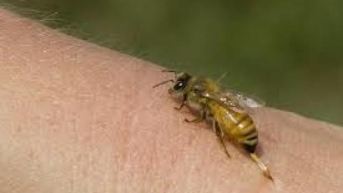 Alertă în Harghita! Numărul cazurilor de înţepături de viespi şi albine a crescut semnificativ.Unii pacienți vin în șoc anafilactic la spital