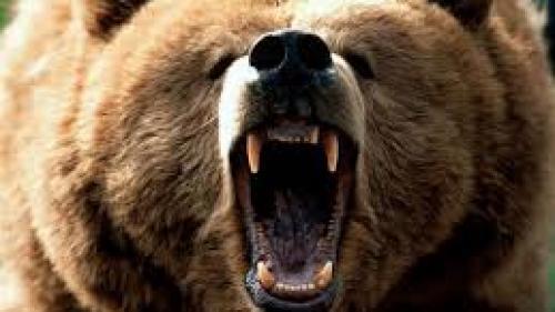 Prahova: Un cioban a fost atacat de un urs, în timp ce era cu oile la păscut!