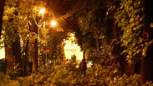Bărbat decedat în Bucureşti, după ce un copac a căzut peste el