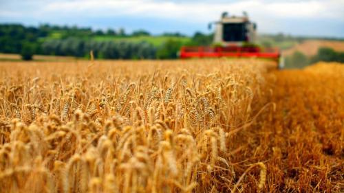 Egiptul aprobă livrarea de grâu din România, respinsă anterior pe motiv că ar conține semințe de mac