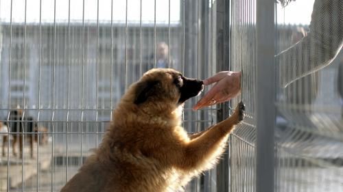 Doi constănțeni, condamnați pentru chinuirea și uciderea unui câine fără stăpân
