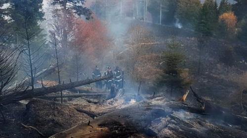 Incendiu într-o pădure din Moroieni; pompierii au mers pe jos o oră pentru a stinge focul