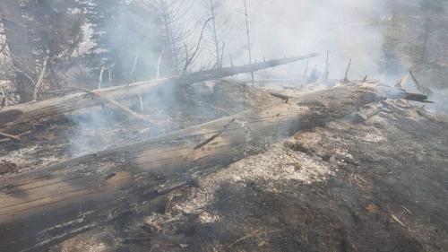 Pompierii urcă iar pe munte la Moroieni. Două focare încă fumegă