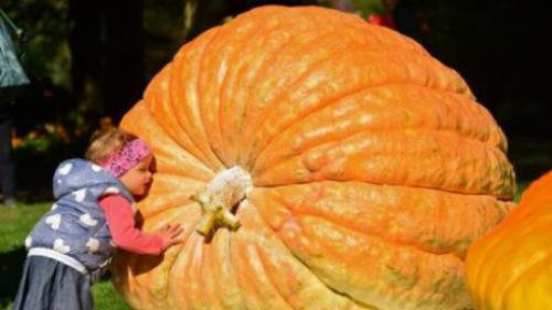 Cel mai mare dovleac cultivat vreodată în America de Nord a fost expus la New York