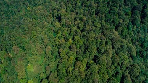 Harta pădurilor virgine din România: 300.000 de hectare identificate