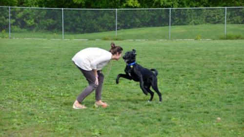 Speranță de viață crescută pentru stăpânii de câini