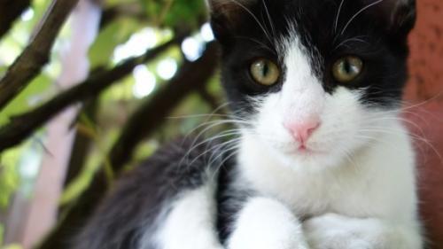 Un motan adoptat dintr-un adăpost a fost numit ''Prinzător-şef de şoareci'' la ambasada Marii Britanii din Iordania