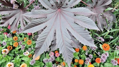 Planta cu efecte miraculoase, dar uitata de oameni