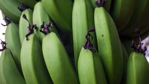 De ce trebuie sa mancam bananele cand sunt inca verzi!