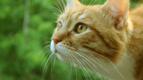 """Incident neobişnuit! O pisică a înghiţit un pix în timp ce se """"lupta"""" să nu fie spălată"""
