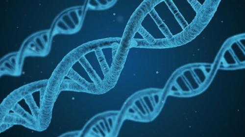 Inteligenţa poate fi evaluată printr-un simplu test ADN