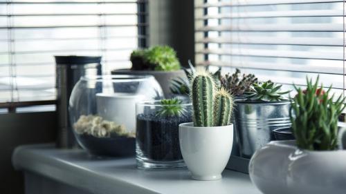 Care sunt plantele care ne purifică aerul din locuință