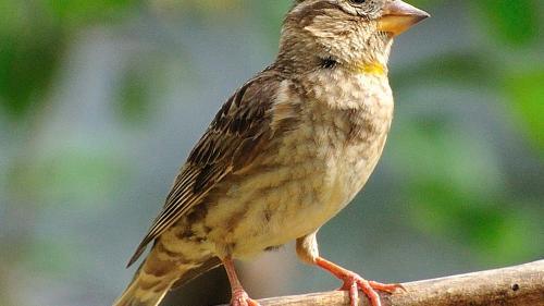 """Populaţiile de păsări din zona rurală a Franţei scad într-un ritm """"ameţitor"""""""