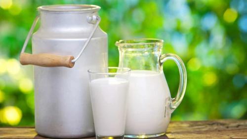 Un lapte rar întâlnit - nu e nici de vacă, nici de oaie, nici de capră - are virtuți vindecătoare surprinzătoare. Și Hipocrat îl recomanda