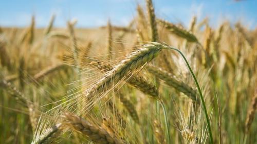 Mafia italiană a realizat 21,8 miliarde de euro din sectorul agricol
