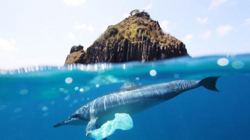 Muntele de plastic din Pacific are suprafață de două ori cât mărimea Franței și cântăreste 79.000 de tone