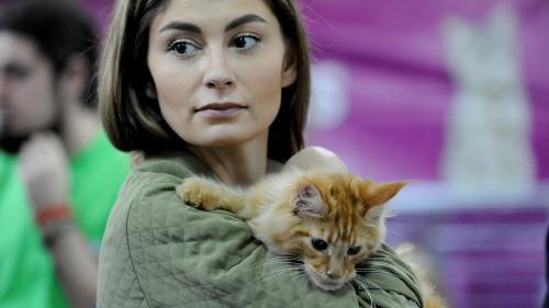 SofistiCAT 2018. Concursul celor mai frumoase pisici (GALERIE FOTO)