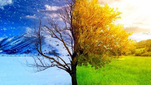 Cele mai bune remedii naturale pentru combaterea asteniei de primăvară