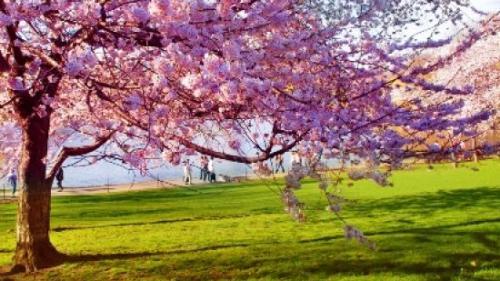 Prognoza METEO pentru 20, 21 și 22 aprilie: Cer senin