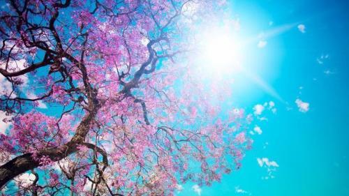 Prognoza METEO pentru 23, 24 și 25 aprilie: Cer senin