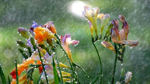 Prognoza METEO pentru 24, 25 și 26 aprilie: Precipitaţii