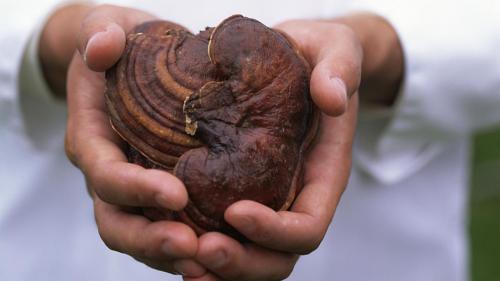"""Tratamente naturiste. Supranumită și """"leacul lui Dumnezeu"""" această plantă tratează cancerul și vindecă alte 12 boli grave. Află totul despre ea"""