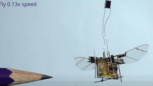 VIDEO - A fost creată prima insectă robotică wireless