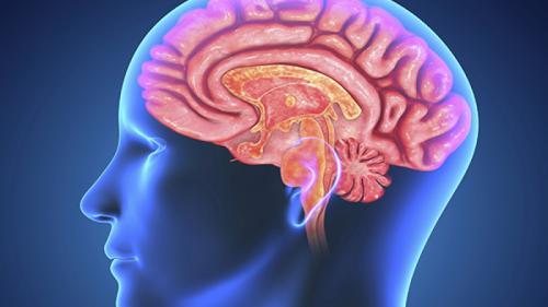 Cum putem ajuta la regenerarea creierului?