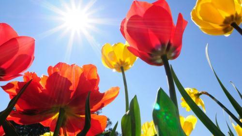 Prognoza METEO pentru 20, 21, 22 şi 23 iunie: Vreme frumoasă