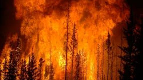 Mii de persoane din Suedia forţate să îşi părăsească locuinţele din cauza incendiilor forestiere