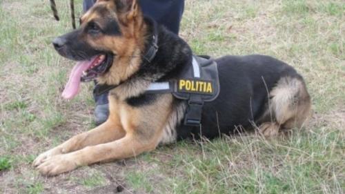 Autorul unui furt din casa unor bătrâni, descoperit cu ajutorul unui câine poliţist
