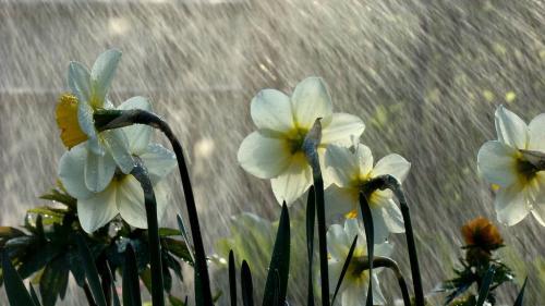 Prognoza METEO pentru 20, 21, 22 şi 23 iulie: Ploi în toată ţara