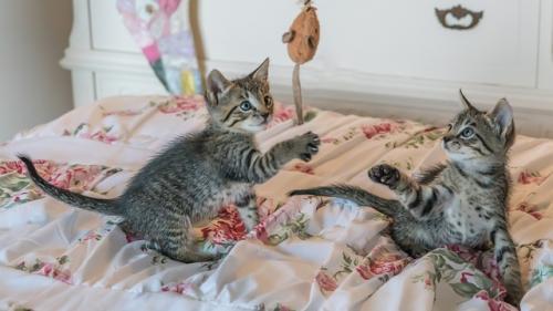 Oferta de munca: Sa mangai pisici patru ore pe zi!