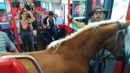 FOTO. Un bărbat din Austria a încercat să călătorească cu trenul alături de calul său