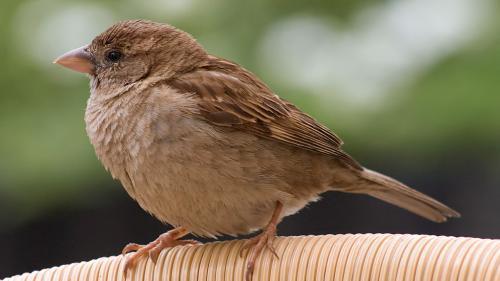 Ce inseamna cand intra o vrabie in casa