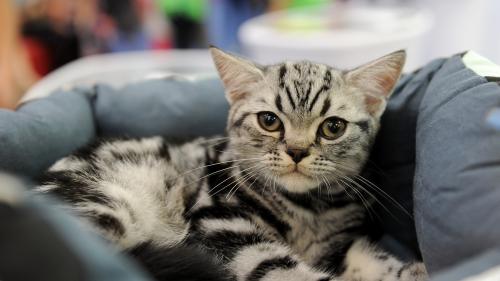 SofistiCAT toamna 2018. Concursul celor mai frumoase pisici (GALERIE FOTO)
