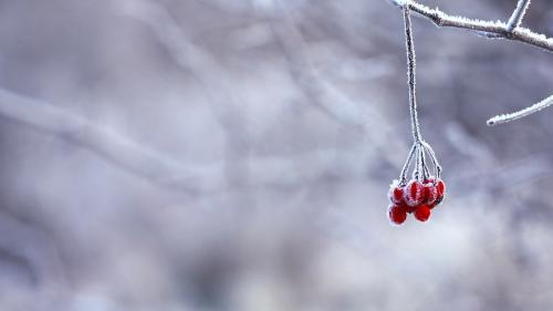 Avertizare ANM. Vremea se schimbă radical. Se anunță primele NINSORI în România, din iarna 2018-2019