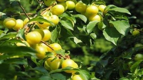 Fructele cu puteri tămăduitoare nebănuite - îmbunătățesc vederea și te ajută să slăbești