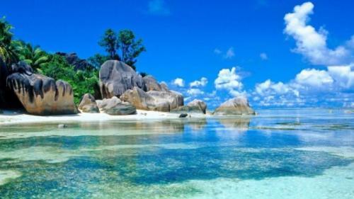 În mările tropicale trăiește o ființă NEMURITOARE. Află cum se numește și tot ce trebuie să știi despre ea