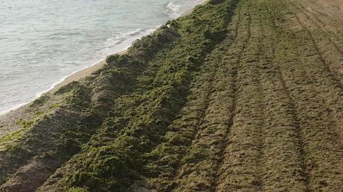 Baie în ciorbă de alge şi plajă la PET