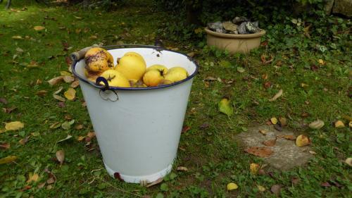 """""""Aurul"""" toamnei – fructul cu 100 de beneficii pentru sănătate"""