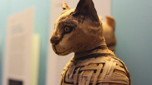 Descoperire NEOBIȘNUITĂ! Zeci de pisici mumifiate au fost găsite în morminte vechi de 6000 de ani