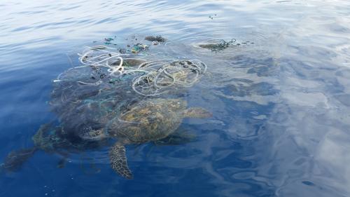Poluarea cu plastic a contaminat chiar și cele mai adânci zone de pe planetă