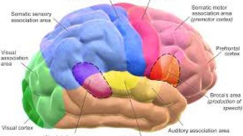 Memoria este mult mai abstractă decât credem