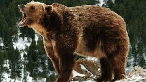 Un bărbat a fost atacat de un urs pe o păşune din Sibiu