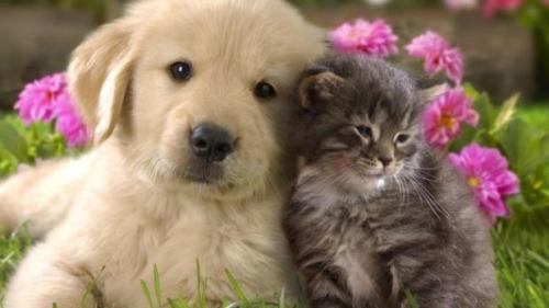 Empatia iubitorilor de animale ar putea fi inscripționată în ADN-ul lor