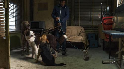 Frizerul de câini - câștigătorul Premiului Palm Dog va susține câinii abandonați